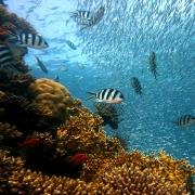 Fische im Meer