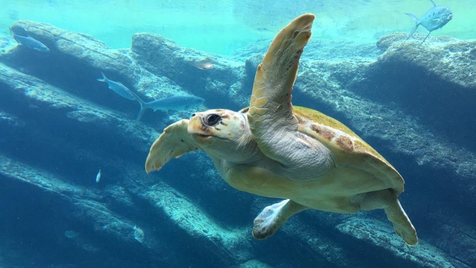 Schildkröte im Meer