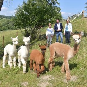 Alpakas für den Himmelschlüsselhof in Texing