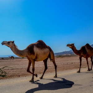 Reisebüroverband lädt nach Oman