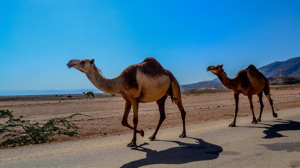 Österreichischer ReiseVerband lädt nach Oman